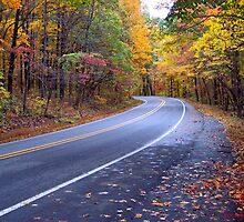Autumn Scenic Road by NatureGreeting Cards ©ccwri