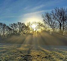 Shafts of Misty Light by relayer51