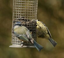 Bird pals by Steve Etheridge