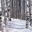 Winter: bare aspens in snowfield, by cascoly