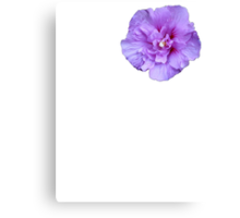 Purple hibiscus flower Canvas Print
