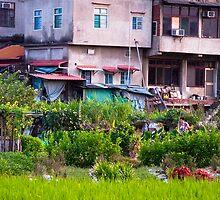 Urban Cultivation  by Jeff Harris