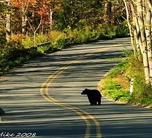 #624  New Jersey Black Bear by MyInnereyeMike