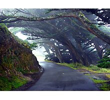 Misty Lane Photographic Print