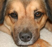 A Dog's Nose Knows... by Terri~Lynn Bealle