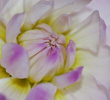 Yellow pink dahlia by mooksool