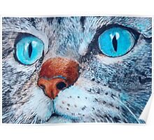 Blue-eyed Cat Poster