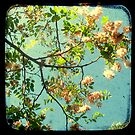 Primavera - TTV by Kitsmumma