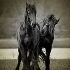 black horses by Nicole W.