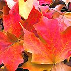 Beauty of Fall by Charlotte Hertler