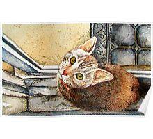 Catsill Poster