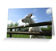 White Goat with bright blue sky Greeting Card