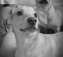 Pretty Posing Puppies by Princess1222