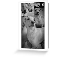 Pretty Posing Puppies Greeting Card