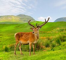 Red Deer by eddiej