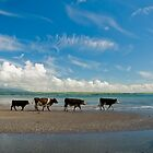 Cows strolling at the beach by Presence