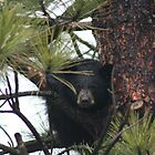 Black Blear, Black Bear, What do you see? by SpringLupin