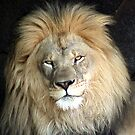 Handsome by Jarede Schmetterer
