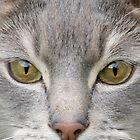 Cats eyes looking at camera close up by ljm000