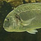 Fishy by Robert Abraham