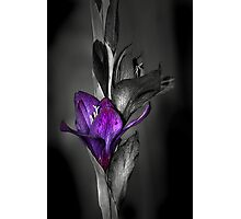 Color me Purple Photographic Print