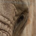 As High as an Elephants Eye by WolfmanK