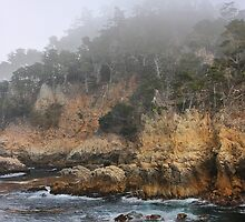 Point Lobos by Barbara  Brown