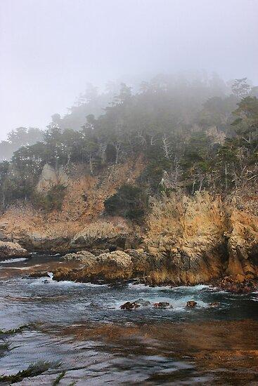 Point Lobos by Barbara  Brown