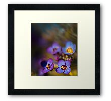 Sweet Dreams.  Framed Print