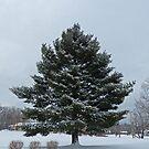 Snow Tree by Susan S. Kline