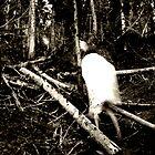 haunted forest by Rachel  McKinnie