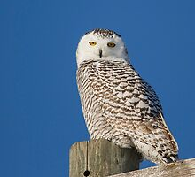Who Is Looking At Me by Thomas Young