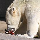 Lunch Time by Jarede Schmetterer