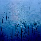 Reeds in blue by Lisa DeLong