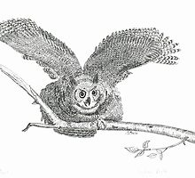 Great Horned Owl: Warning - Pen & Ink by Gordon Pegler