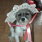 Chloe's Ready for Spring by Anne Gitto
