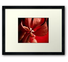 A touch of autumn...  Framed Print