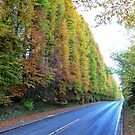 Tallest Beech Hedge in the World by Braedene