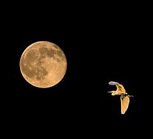 Fly Me To The Moon 2 by Marvin Collins