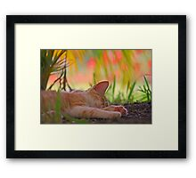 The Abstract Dreams of a Cat Framed Print