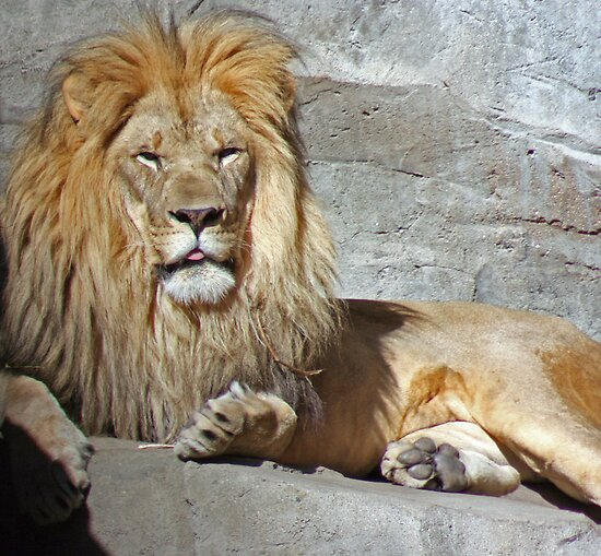 His Royal Highness by Jarede Schmetterer