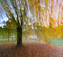 Autumn Streaks by WillOakley
