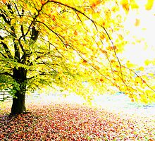 Bright Autumn Tree by WillOakley