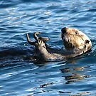 Sea Otter by lilestduncan