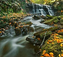 Roddlesworth's 'Hidden Gem', Lancashire by Steve  Liptrot