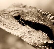 Water Dragon Dreams in Sepia by Lesley Smitheringale