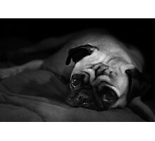 Living The Pug Life Photographic Print