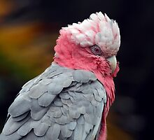 Ruffled in Pink II by Lesley Smitheringale