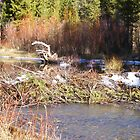 Beaver Dam by Elizabeth Stevens