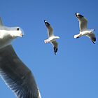 Flying seagulls by Hummingbyrd